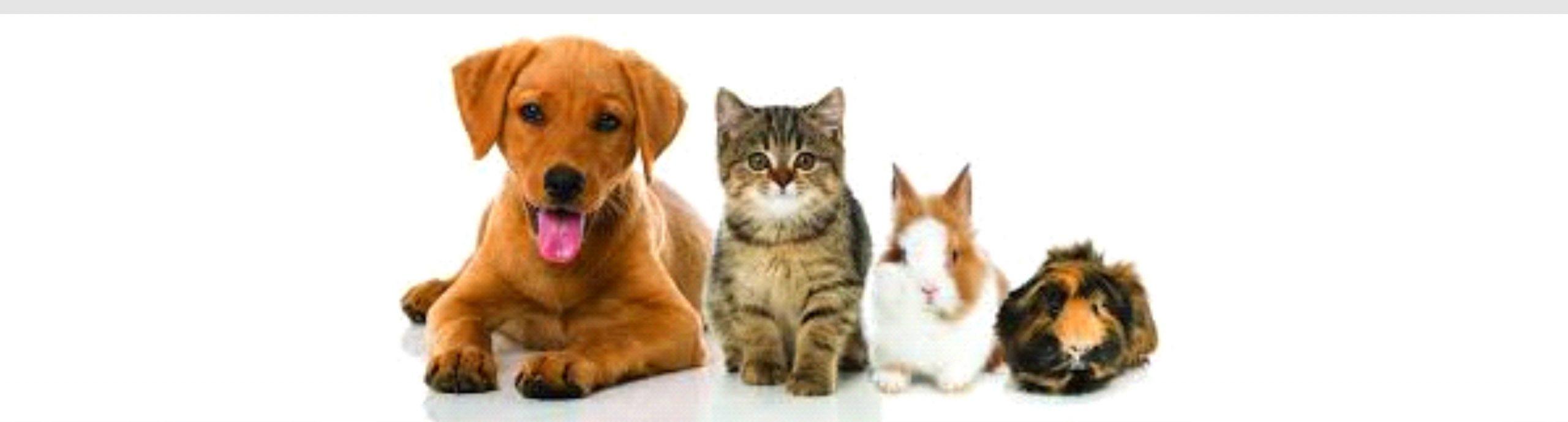 Discounted Pet Medications
